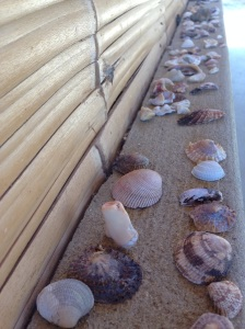 Our impressive shell collection.